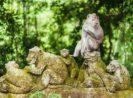 Daftar 9 Hotel Murah Dekat Hutan Cagar Monyet Suci Paling Rekomendeed