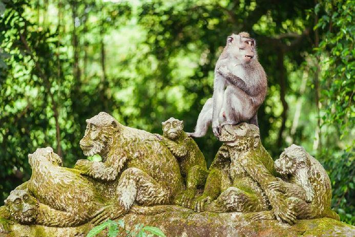 9 Hotel Murah Dekat Hutan Cagar Monyet Suci